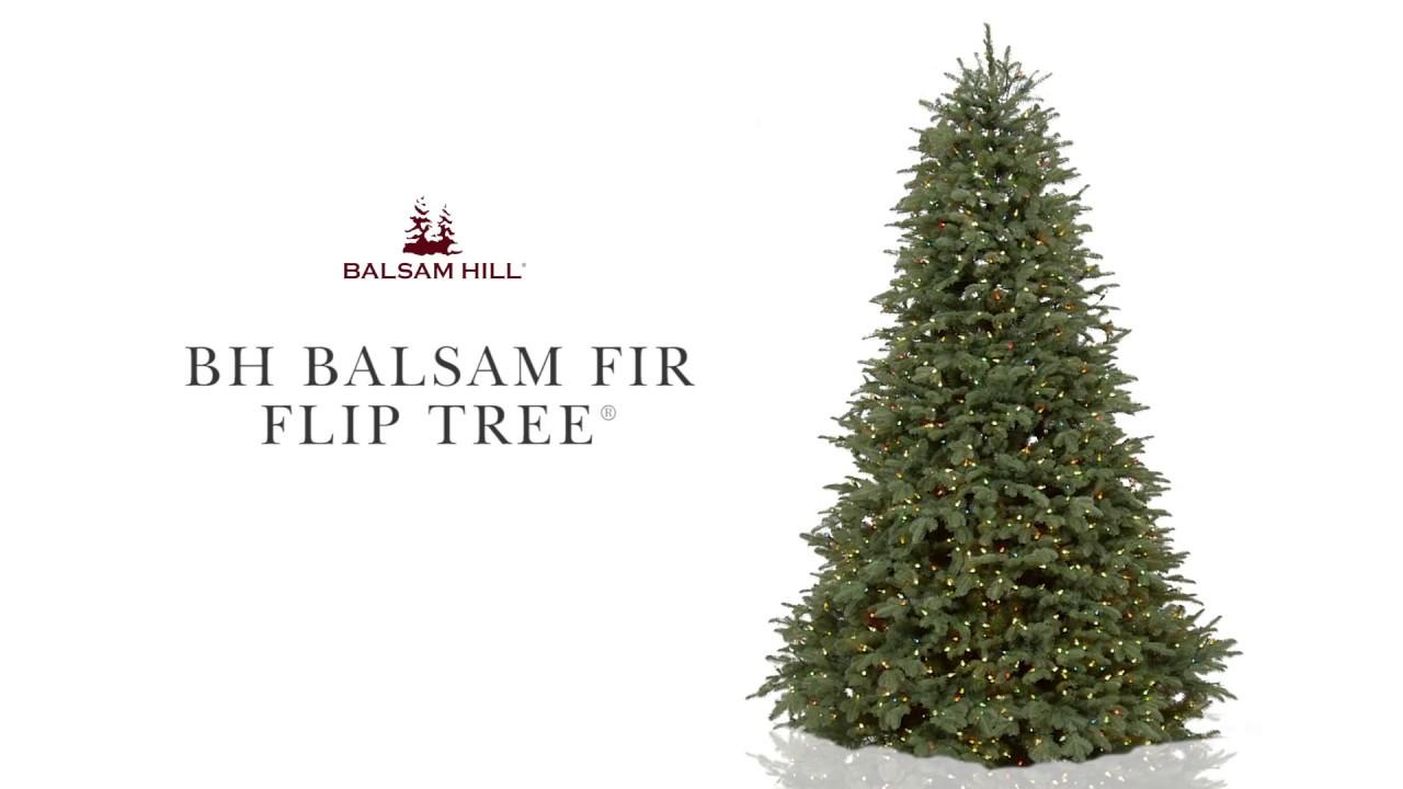 Bh Balsam Fir Flip Tree From Hill