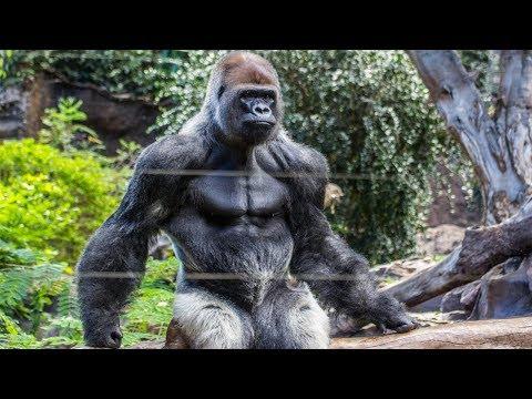 أقوى الحيوانات على وجه الارض  - نشر قبل 3 ساعة
