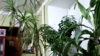 Домашнее видео № 7