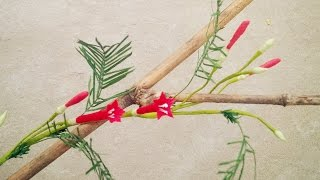 How To Make Cypress Vine Paper Flower From Crepe Paper - Craft Tutorial