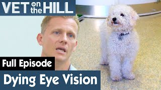 Dogs With Progressive Retinal Atrophy | FULL EPISODE | S02E20 | Vet On The Hill