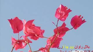 Video hafiz kashif ullah Pashto New Zaberdast Naat 2018 download MP3, 3GP, MP4, WEBM, AVI, FLV November 2018