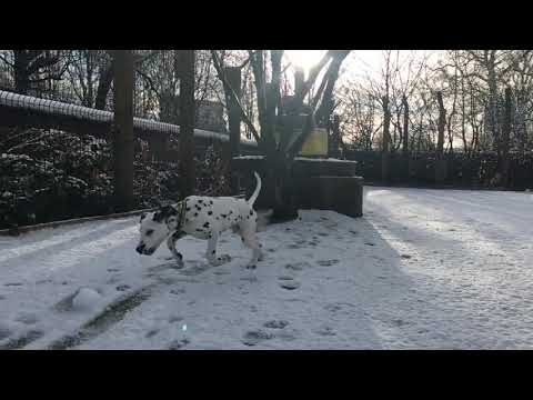 Glasgow Puppy Sees Snow For The First Time!