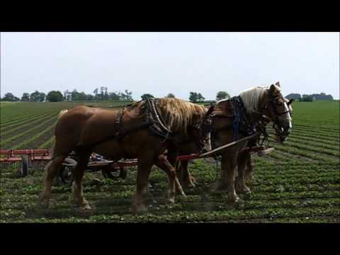 Amish Horse Farming in Arthur Illinois