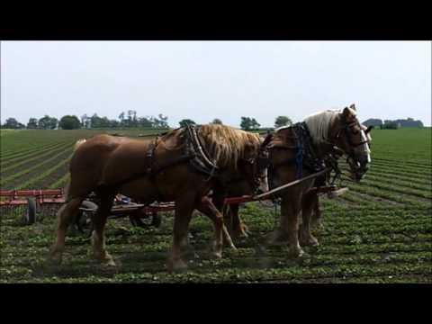 Amish Horse Farming in Arthur Illinois