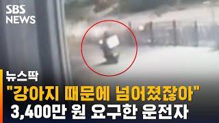 """""""강아지 때문에 넘어졌잖아""""…3,400만 원 요구한 운전자 / SBS / 뉴스딱"""