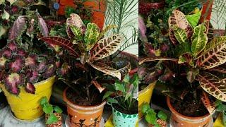 इस तरह बनाए घर के अंदर गार्डन, Mini indoor Garden ideas,Indoor garden overview, anvesha,screativity