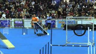 Sport News, Agility: German Shepherd Shandy In Dog Agility Contest, South Africa