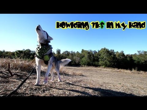 RISKING IT: Canon 70D Wide Angel Video Test (Siberian Husky Howling+ Mushing))