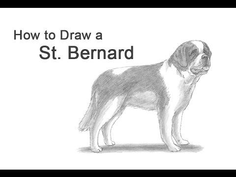 how to draw a dog st bernard youtube