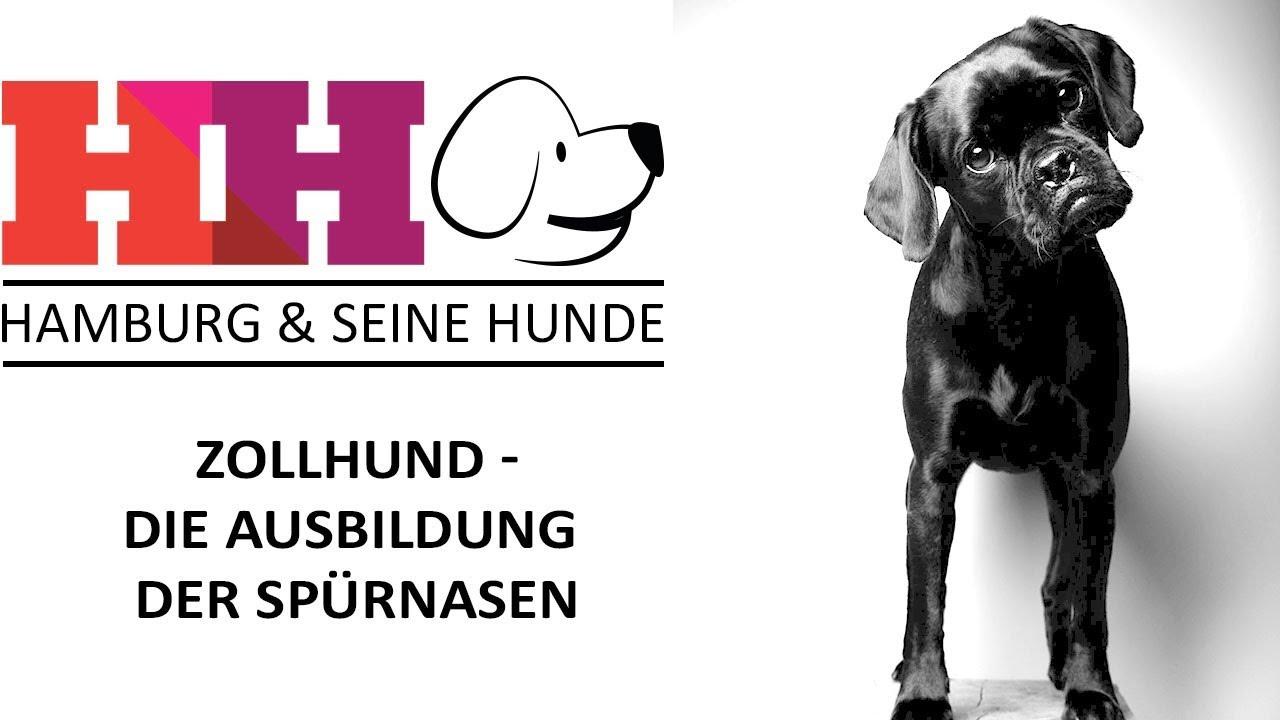 Hamburg Seine Hunde Folge 18 Zollhund Die Ausbildung Der