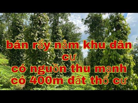 Nhà đất đăk nông bán rẩy có nguồn thu mạnh. Có 400m đất thổ cư. Lh Zalo 0914743898