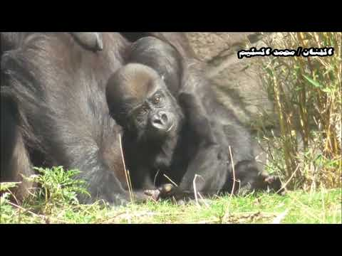 محمد السليم مرحوم ياقردٍ توفى من شهر بلحن جديد