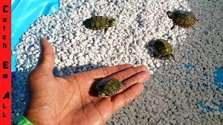 MINI POOL Pond TURTLE Baby RESCUE!