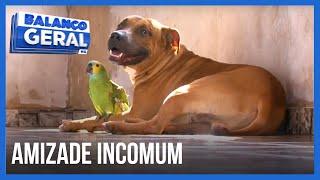 BALANÇO GERAL - Cão e papagaio têm amizade incomum