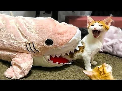 Try Not To Laugh or Grin While Watching Funny Animals Videos #53