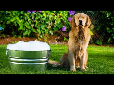 How to give your dog a bath at home