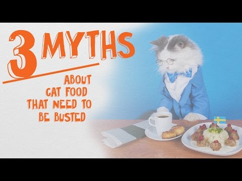 3 Cat Food Myths That Need To Be Busted