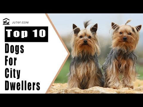 Best Dog Breeds For Apartments - Top 10 Best Dog Breeds For City Dwellers