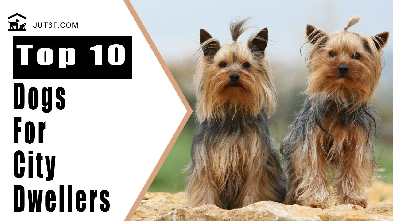 Best Dog Breeds For Apartments - Top 10 Best Dog Breeds ...
