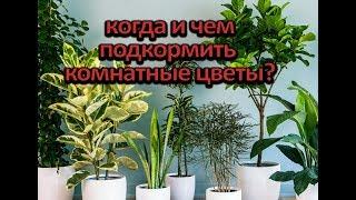 Когда и чем подкормить комнатные цветы?