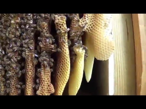 Honeycomb hive cut out