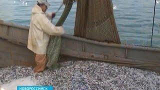 Добыча рыбы на Кубани: есть промысел и спрос, но отстаёт переработка