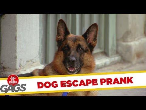 Dog Escape Prank