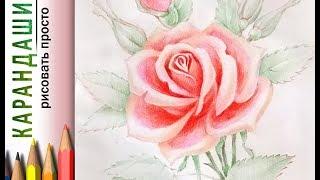 Как нарисовать рисунок РОЗА! Карандаши ЦВЕТНЫЕ для начинающих! Урок рисования. Мастер-класс цветок.