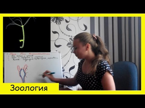 биология видеоурок