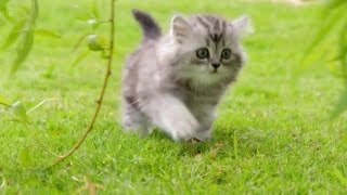 【B站/纪录片】第五频道-小喵的秘密.上(Ch5-the secret life of kittens )英语中字/翻译by纪录片之家字幕组 thumbnail