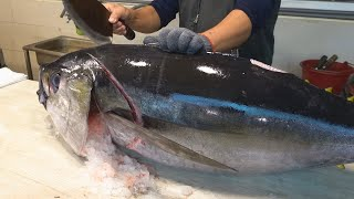 Bigeye Tuna Cutting Skill / 大目鮪魚切割技能 - How to Cut a Bigeye Tuna for Sashimi