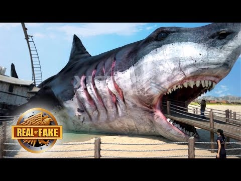 Real or Fake? Giant Megalodon Building & More