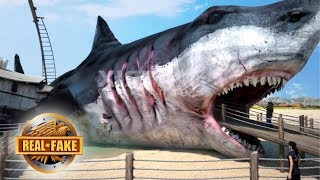 GIANT MEGALODON BUILDING - real or fake