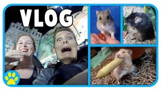 Pets Try New Toys & Hamster Cage Upgrades Begin | + Fairground Rides Terrify Me...
