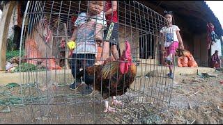 Con gà kỳ lạ nhất thế giới, có giá 200 triệu, ở Sơn La: Đang là gà mái, bỗng biến thành gà trống