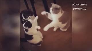 Классные ролики про котов  №1