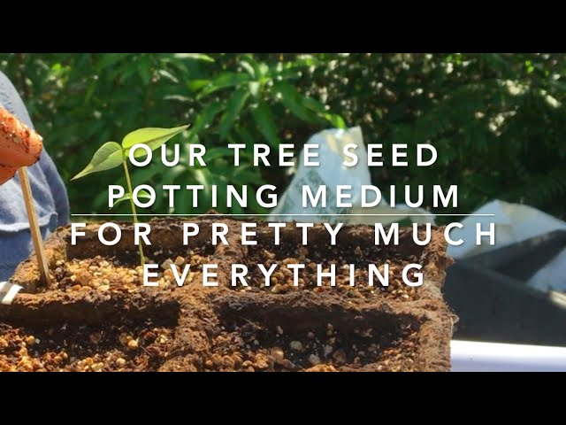 Pot time! - How to make Soil-less Potting mix for rare seeds