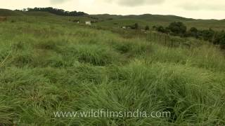 The green, green meadows of home - Cherrapunji