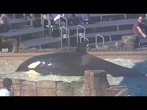 Amaya's Birthday Celebration  - Dec. 2, 2017 - SeaWorld San Diego