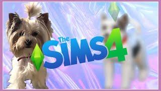 Создание персонажа | Собаки в Sims 4 | CAS