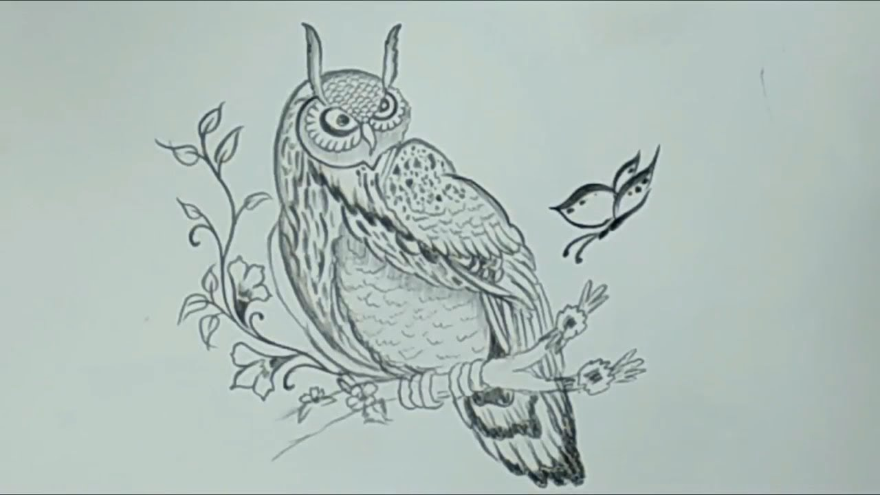 Pencil sketches easy drawing an awesome owl simple