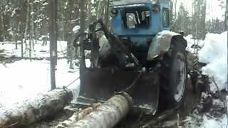 МТЗ 82 в лесу (трелевка)