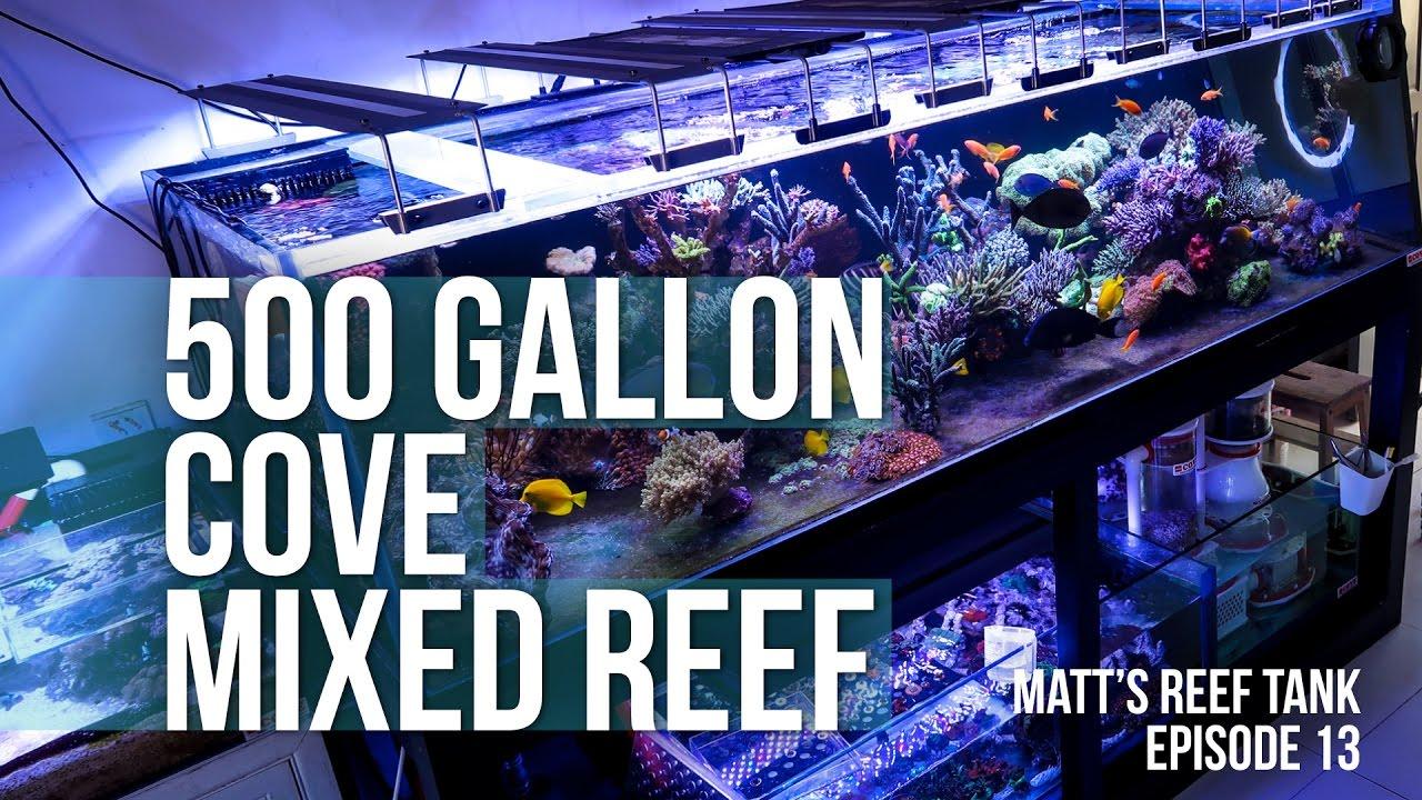 Best Reef Fish Food Brand
