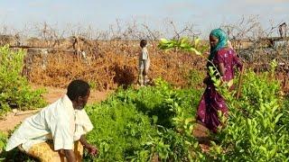 Somália: apoio às comunidades durante conflitos prolongados
