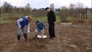 Wielopokoleniowa uprawa drzew owocowych w rodzinie Państwa Kotów w Bielinach koło Kielc
