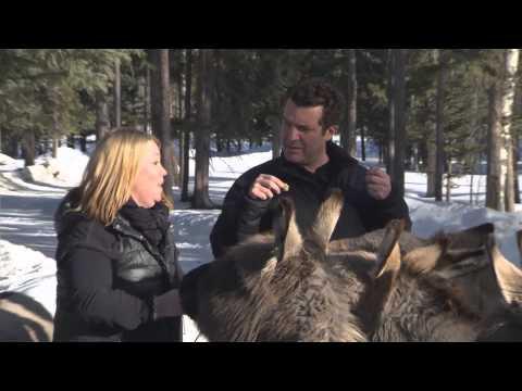 RMR: Rick And Jann Arden At The Donkey Sanctuary