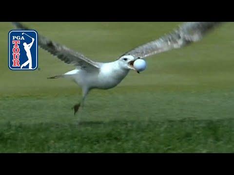Best bird moments on the PGA TOUR