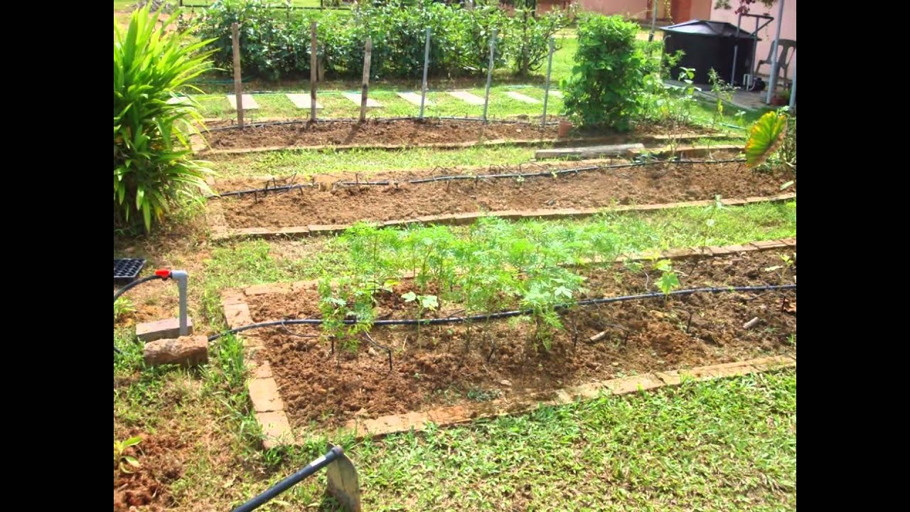 Backyard food garden ideas - Vegetable Garden Design Backyard Vegetable Garden Design Ideas