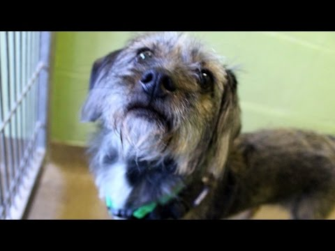 Stray Dog Gets Adopted After Showing Off Ginger Rogers Dance Moves
